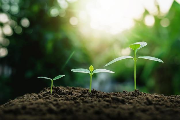 토양에서 식물 성장