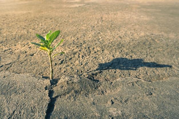 Plant growth through the concrete ground