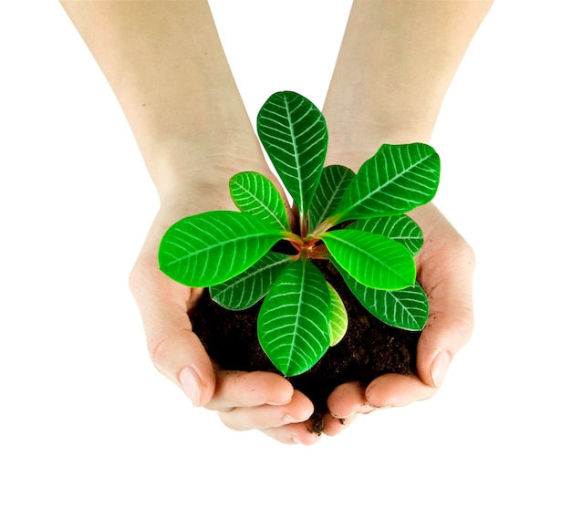 Plant in a hand isolated on white surface