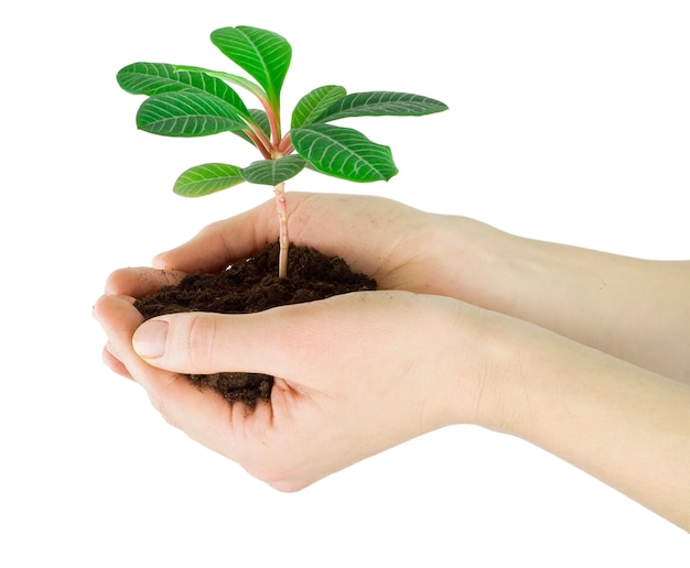 Plant in a hand isolated on white