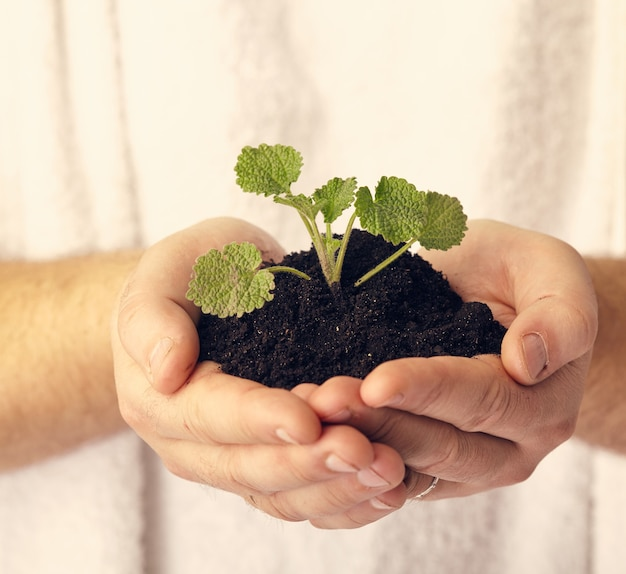 A plant in hands against white surface