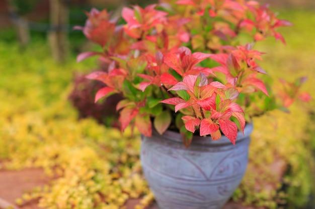 Посадить в горшок в осеннем саду