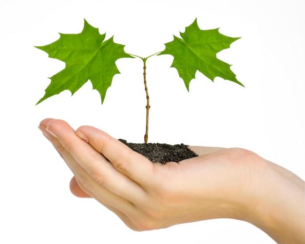 흰색 배경에 고립 된 손에 식물