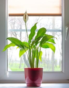 窓際の赤い鉢に植える