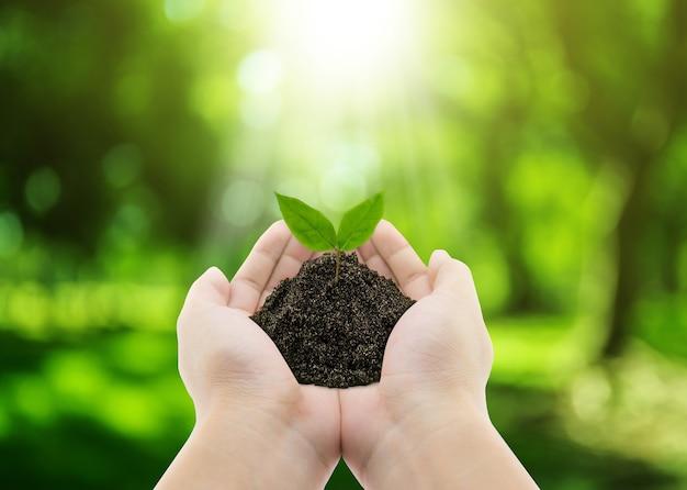 植物を手に - 草の背景、環境コンセプト