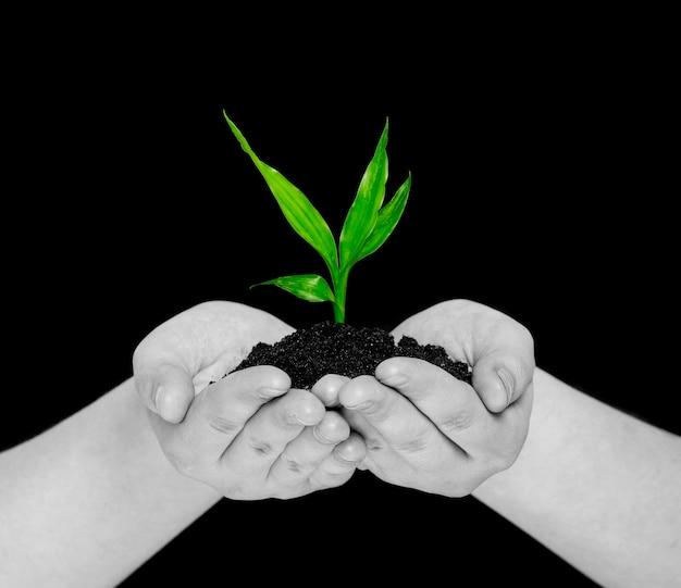 블랙에 고립 된 손에 식물