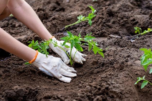 庭に植える