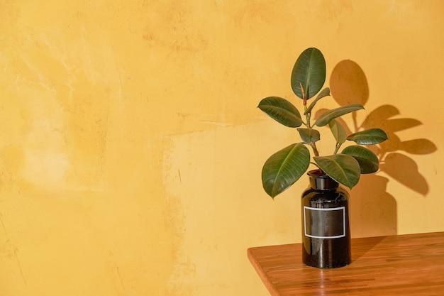 노란색 벽 테이블에 실내에 심습니다. 노란색 질감 된 벽에 유리 플라스크에 실내 식물. .