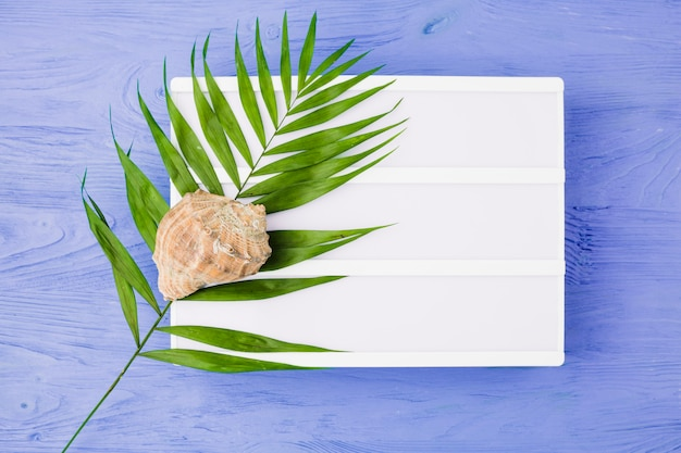 Plant leaf near seashell and tablet on board