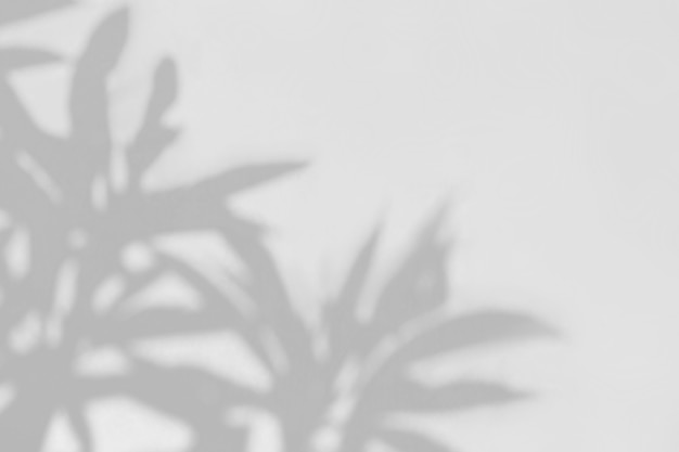 Plant leaves natural shadow overlay on gray background, overlay effect for photo, mock up, product, wall art, design presentation