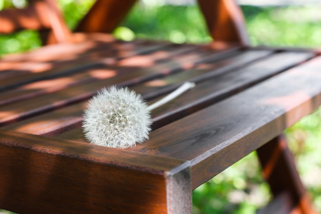 The plant lies on furniture made of wood rest and relaxation in the midst of nature and greenery