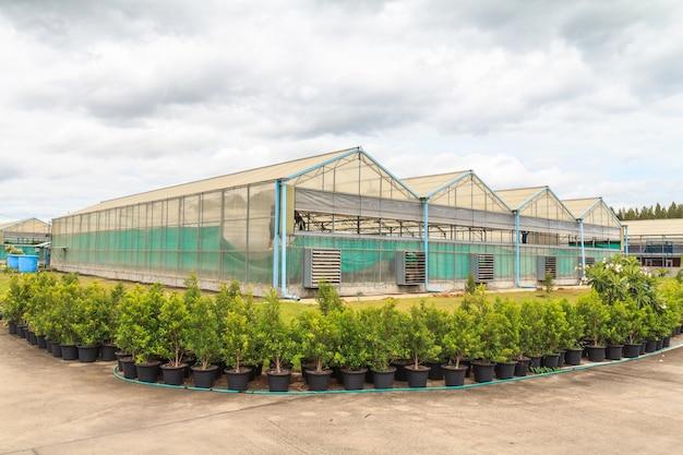 Plant nursery of vegetable.