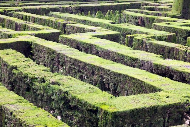 바르셀로나의 parc del laberint de horta에서 미로의 식물