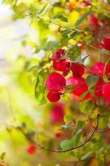 ピンクの花の植物
