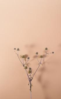 影のあるベージュの背景にあるエリンジウム属の植物ミニマリストの静物上面図