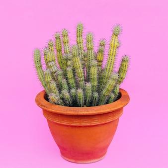 ピンクに植えます。サボテン愛好家。最小限のコンセプト。サボテンアート