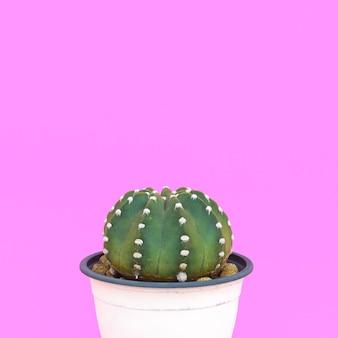 ピンクに植えます。サボテン愛好家。最小限のコンセプト。ピンクの背景に鍋のサボテン