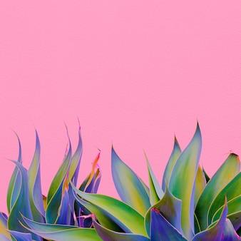 ピンクに植えます。植物愛好家。最小限のコンセプト。カナリア諸島