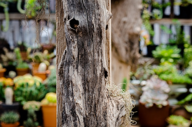 식물 장식 뼈 지점 라디오 신발 기호 복고풍 오래 된 빈티지 장식