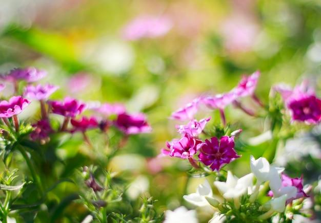 식물 야외 아름다운 꽃 봄