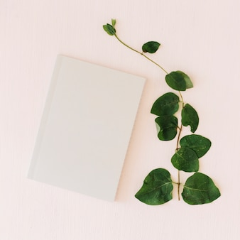 Plant and paper