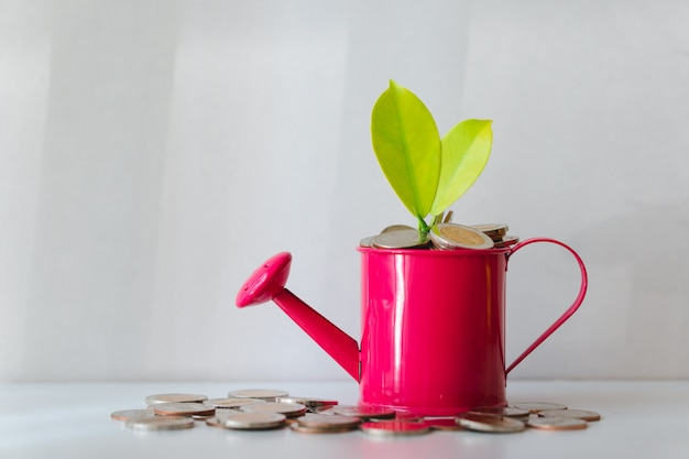 Plant on pile coins in watering can using as financial growth and business investment concept