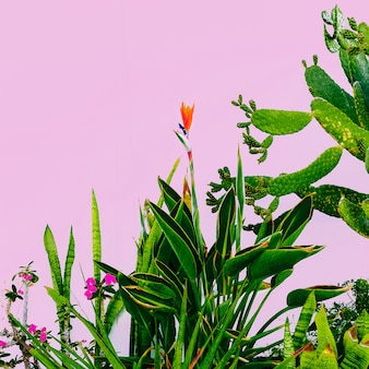 Plant on pink. outdoors. minimal fashion design. plants lover. green garden tropical mood