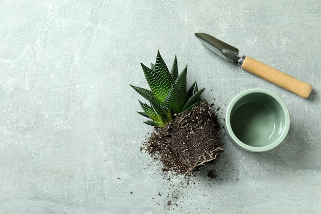 Plant, pot and garden shovel on gray textured table