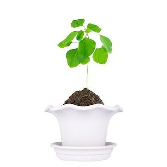 Горшок для растений, изолированные на белом фоне.