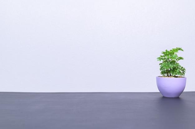 Plant pot love tree nature concept
