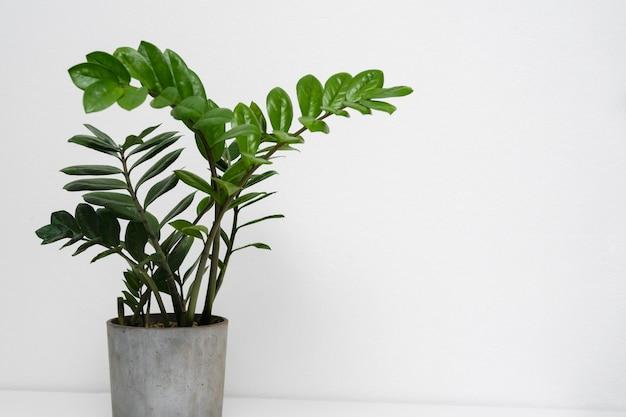 테이블에 식물 냄비를 닫습니다.