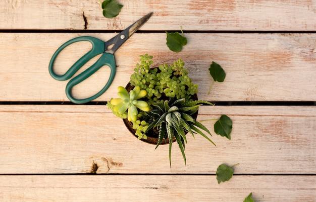 Plant in pot next to scissors