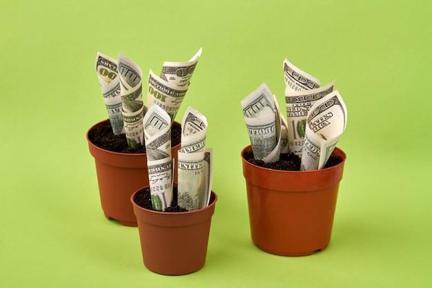 分離されたお金の成長と植木鉢