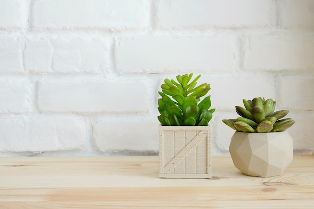 Plant pots on wood table over white wall background