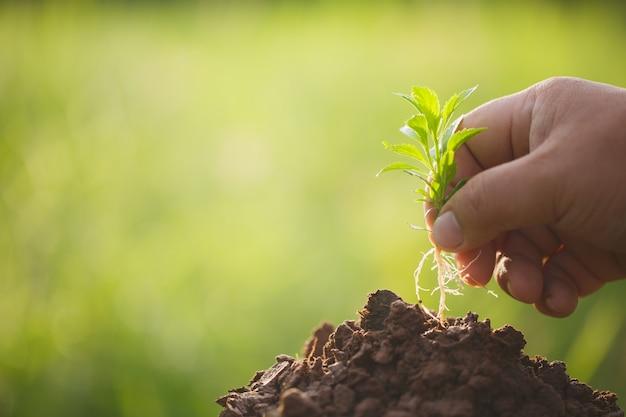 Саженец завода в руке, концепция посадки и выращивания.