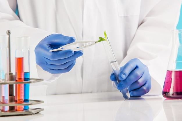 Plant sciences in lab