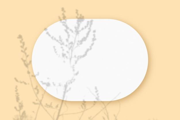 베이지 색 테이블 배경에 질감 된 흰 종이의 타원형 시트에 겹쳐진 식물 그림자