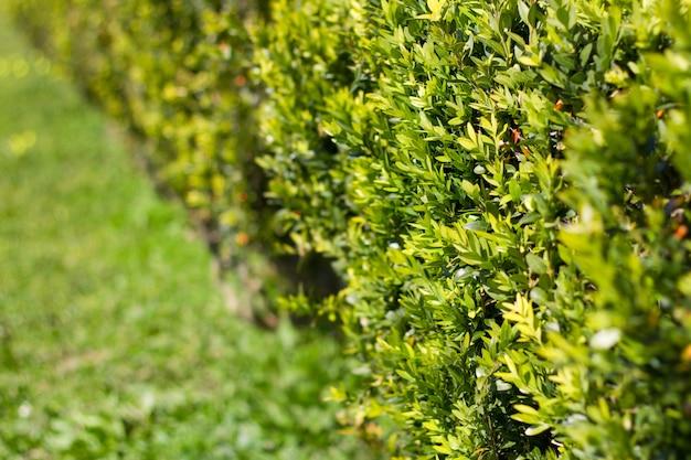 Plant in summer garden
