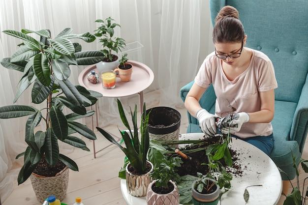 식물 이식, 여성 돌봄 관엽 식물 및 이식 식물