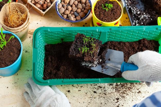 식물 이식 과정은 원예 액세서리를 닫습니다.