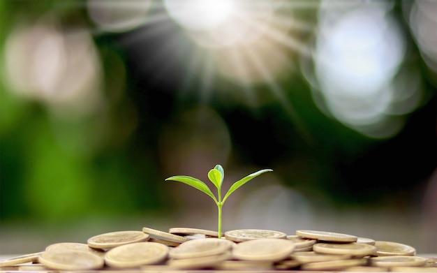 金融ビジネスのコンセプトでコインの山から木を植えます。貯蓄とお金の成長。