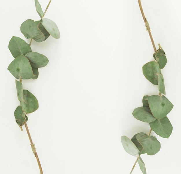 Pianta ramoscelli con foglie verdi