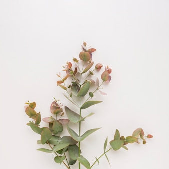 Plant twigs with green and vinous leaves