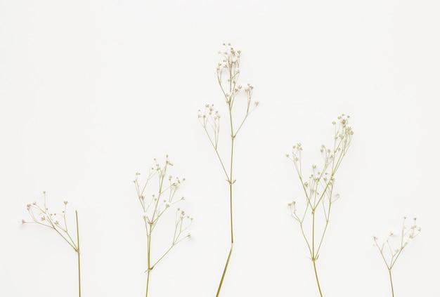 Pianta ramoscelli con fiorellini