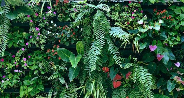 무성한 녹색 색상의 식물 벽, 벽에 다양한 식물 숲 정원 난초 고사리 잎 손바닥