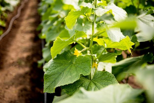 温室で花と葉を持つ植物