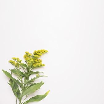Pianta con fiori su steli con foglie verdi
