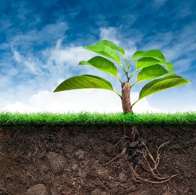 Растение с зелеными листьями в почве