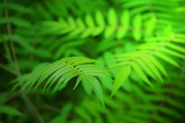 緑の葉を持つ植物