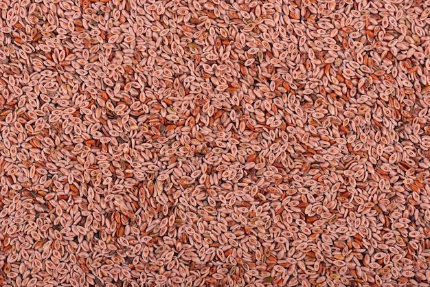 Plantago ovata 씨앗 배경. 질경이, 인도 벼룩 또는 차전자피 씨앗. 확대.